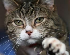 CIA kelimenin tam anlamıyla sermayeyi kediye yüklemiş.