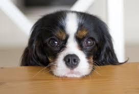 Köpeğime baktığımda, bebeğime bakmış gibi oluyorum, diyen köpek sahipleri, hissiniz bilimsel olarak ispatlandı.
