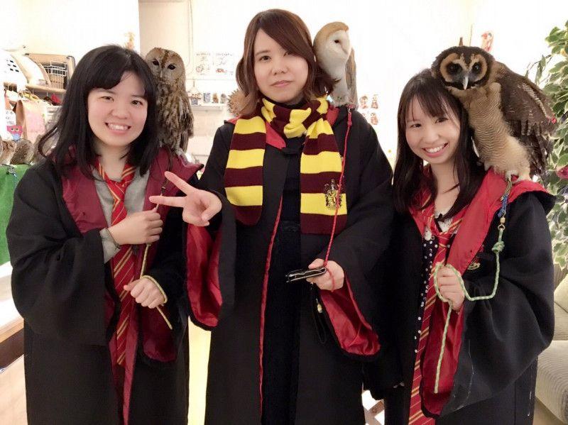Japonya'da Yeni Trend, Baykuşlu Kafe'ler!
