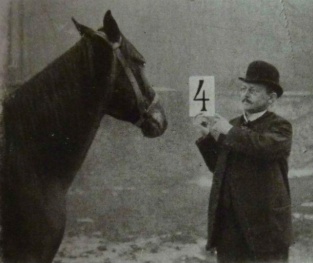 akıllı at hans ile ilgili görsel sonucu