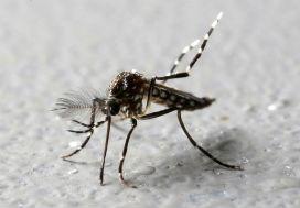 Bilimin sivrisinekle imtihanı