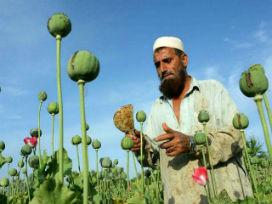 Dünyadaki eroin üretiminin %90'ından Afganistan sorumlu!