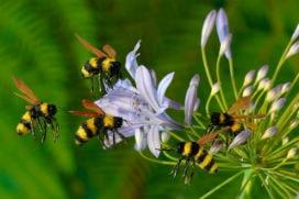 Asla bozulmayan tek besin maddesi olan bal ve arılar hakkında en ilginç bilgiler!
