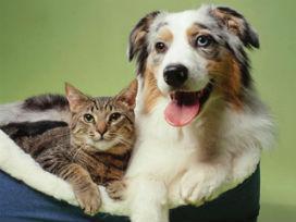 Köpekler mi sahiplerini daha çok sever, yoksa kediler mi?
