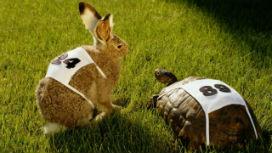 Dünya Okulu Khan Akademi: Şans tanınan kaplumbağalar, en az tavşanlar kadar başarılı olabilir.