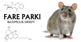 Arkadaşları ve eğlenceli oyuncakları olan fareler, uyuşturucu bağımlısı olmuyor!