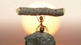 Karada yaşayan hayvanların toplam biyokütlesinin %15'ini karıncalar oluşturuyor!