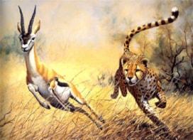 Doğanın Dengesi: Ceylan, hız şampiyonu Çita'dan nasıl kaçarak kurtulabilir?