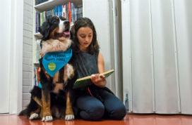 """Finlandiya okullarında öğretmenlere yardım eden """"Dinleyici Köpekler"""""""