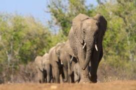 Fillerle ilgili düşüncelerinizi etkileyecek gerçekler!
