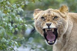 Hayvanlar dişlerini fırçalamadıkları halde dişleri neden çürümez?