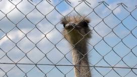 Hayvanat bahçesi hipotezi nedir?