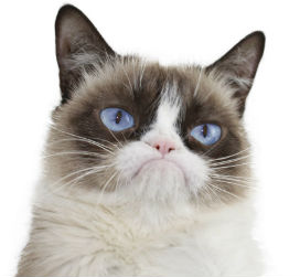 Kediler neden benden nefret ediyor?