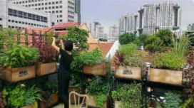 Şehirde yetişen sebze ve meyve sağlığımızı nasıl etkiler?