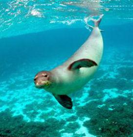 Bir deniz hayvanı öldüğünde bedenine ne olur?