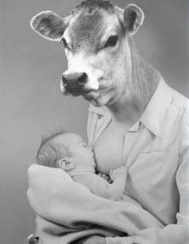 İnsan başka türlerin sütünü içmeye ne zaman başladı? Sadece insan mı başka türlerin sütünü içer?