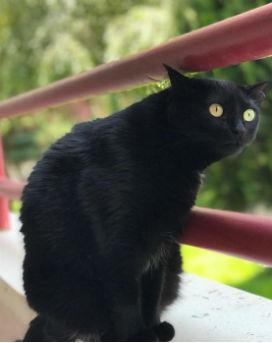Kara Kedi Şans mı Getirir Şanssızlık mı?