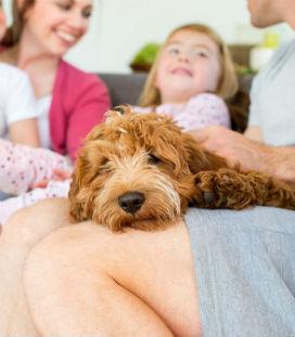 Bilimsel Araştırmalara Göre Evcil Hayvanlar İnsanlarını Nasıl Etkiler?