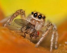 Örümcekler Ne Yer?