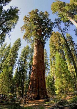 Gezegenimizde Kaç Ağaç Var?
