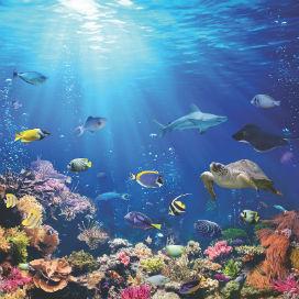 Kasırgalar Deniz Canlılarının Yaşamlarını Nasıl Etkiler?
