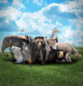 Hayvanlar Gerçekten Doğal Felaketleri Önceden Hisseder mi?
