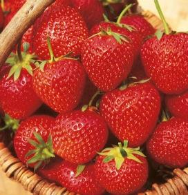 Meyve ve Sebzeleri Taze Tutmanın 6 Etkili Yolu