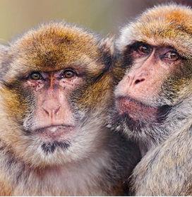 Neden Hayvanları Birbirinden Ayırt Etmek Zordur?