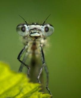 Yeryüzündeki Bütün Böcekler Birdenbire Yok Olsa!