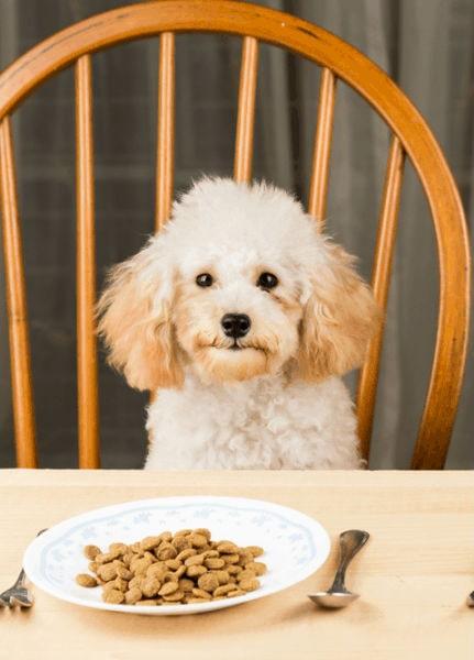 İnsanlar Köpek Maması Yiyebilir mi?