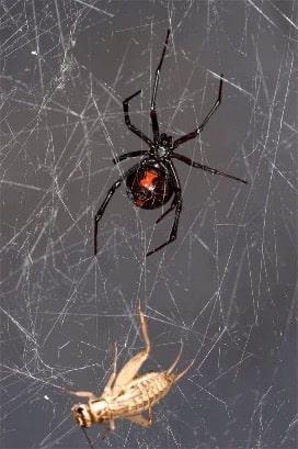 Neden Örümcek Ağlarını Örümceklerden Daha Sık Görürüz?